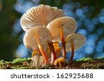 Group Of Small Mushrooms On A...