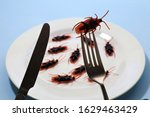 Bugs on a plate.insects as food ...