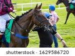 Small photo of Racing steward walking racehorse towards the start gate
