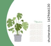 monstera home plant  tree in...   Shutterstock .eps vector #1629666130