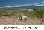 Small photo of Animal scull on a sandy beach on a hot summer day, mountain landscape out of focus in the background. Selective focus.