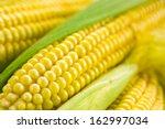 Corn. Soft Focus