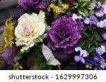 Ornamental Cabbage  Flowering...