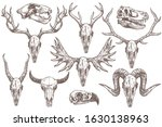 Vector Collection Of Hand Drawn ...
