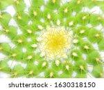 cactus beautiful plant summer... | Shutterstock . vector #1630318150