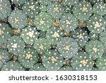 cactus beautiful plant summer... | Shutterstock . vector #1630318153