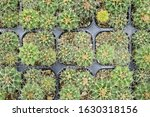 cactus beautiful plant summer... | Shutterstock . vector #1630318156