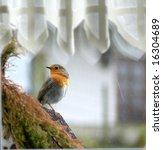 early bird | Shutterstock . vector #16304689