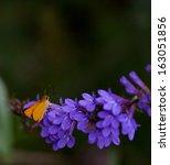 Delaware Skipper Butterfly ...