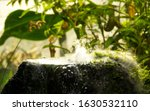 Steam Of A Small Geyser From A...