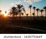 Palm Trees Silhouettes Against...