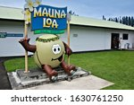 Hilo  Big Island  Hawaii   Usa...