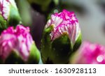 macro close up of the bud of... | Shutterstock . vector #1630928113