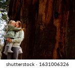 The beautiful landscape of The National Sequoia Park. The family  - mother and her little daughter are Hugging at the California territory. This is a sunny day  beside the redwood - stock photo