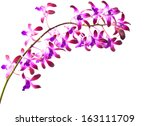 Pink Orchid Flower  Isolated O...