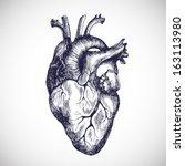 human heart. vector... | Shutterstock .eps vector #163113980