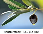 olive and olive oil drop... | Shutterstock . vector #163115480