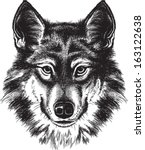 Vector sketch of a wolf's face - stock vector