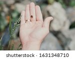 little frog tadpole sits on a human hand against the background of nature
