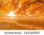 autumn field  sunshine in... | Shutterstock . vector #163160900
