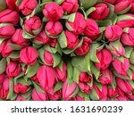 Stack Of Red Tulips In Bouquet...