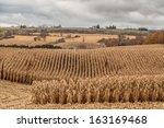 Late Autumn Corn Field In...