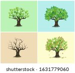 Oak Tree In Four Seasons  ...