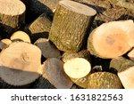 Deforestation Of Trees  Forests ...