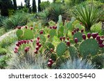 Large Plantations Of Prickly...