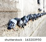 Pigeons In A Row On Ancient...
