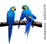Blue And Gold Macaw Bird In...