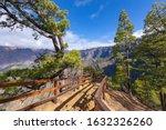 Pine Forest At Caldera De...