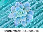 blue flowering cactus on blue... | Shutterstock . vector #163236848