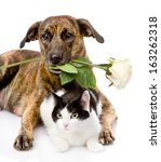 Stock photo cat and dog with a white rose isolated on white background 163262318