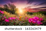Stock photo rural countryside landscape featuring pink roses and tall grasses bathed by early morning light 163263479