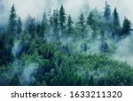 Misty Landscape With Fir Forest....