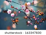 beautiful flowering japanese... | Shutterstock . vector #163347830
