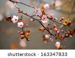 beautiful flowering japanese... | Shutterstock . vector #163347833