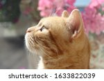 Profile Of A Beautiful Cat With ...