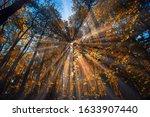 Beautiful Sun Rays In Autumn...