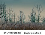 Wintry Scene Of Bare Trees And...