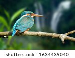 Beautiful Blue Kingfisher Bird...