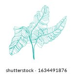 leaves line art ink drawing on... | Shutterstock . vector #1634491876