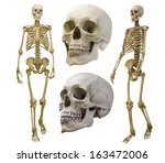 human skeletons collection... | Shutterstock . vector #163472006