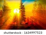 Sunrise forest dawn view. Winter forest trees sunrise dawn landscape view