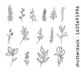plant drawings of blooming wild ... | Shutterstock .eps vector #1635691996