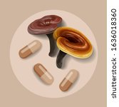 reishi mushroom   ganoderma... | Shutterstock .eps vector #1636018360