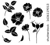 hand drawn isolated wild rose... | Shutterstock .eps vector #1636119013
