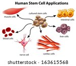 Illustration of the Human Stem Cell Applications on a white background