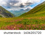 Beautiful alpine meadow with flowering herbs. - stock photo